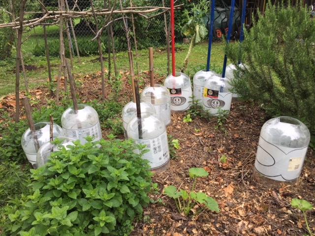 Ethique bio et recyclage jusqu'à la fin ! Nos fûts vides prennent quartier dans un potager bio en Suisse Romande. Drink Organic, Save the Planet !